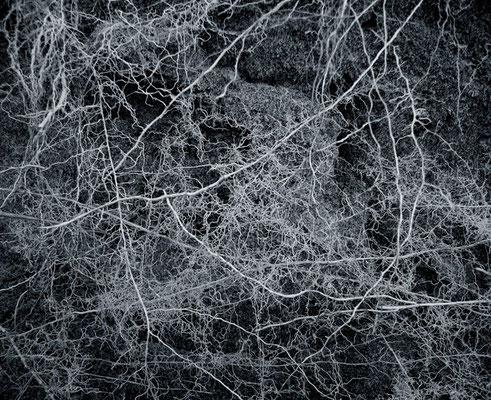 Michael Koch: Adya, 2014, C-Print, Diasec