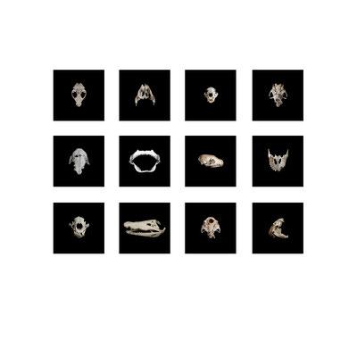Michael Koch: tableau 1, egos & valeurs, C-Prints, Diasec