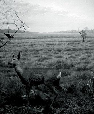 Michael Koch: Vision I (Reh), 2014, C-Print, Diasec