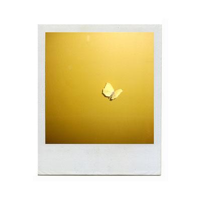 Michael Koch: butterfly (yellow), 2015, Polaroid