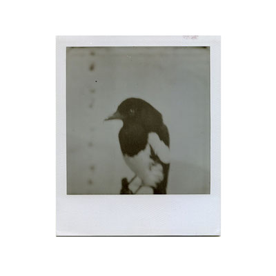 Michael Koch: Pie 1, 2014, Polaroid