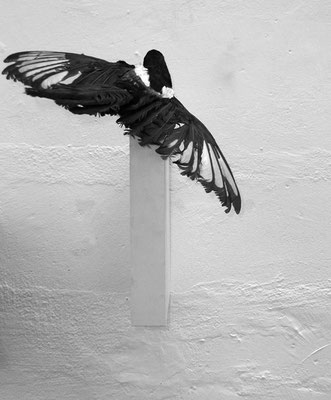 Michael Koch: magpie (studio installation), 2015, mixed media