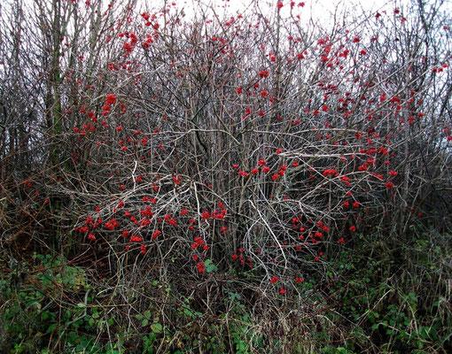 Michael Koch: red, 2014, C-Print, Diasec