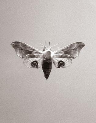 Michael Koch: Owl, 2015, Inkjet-Print