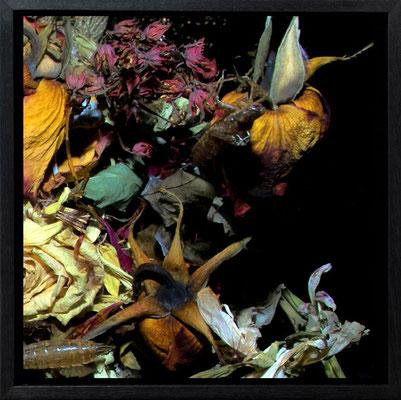 Michael Koch: Bouquet, 2011, C-Print, Diasec, gerahmt/Schattenfuge, from: arena