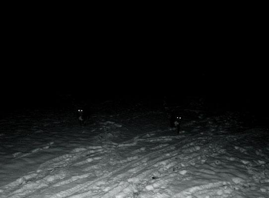 Michael Koch: nightdogs, 2013, C-Print, Diasec