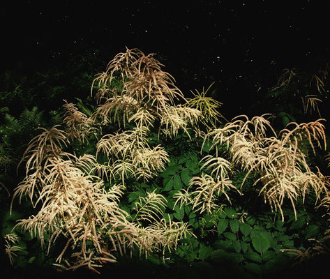 Michael Koch: night plants, 2015, C-Print, Diasec