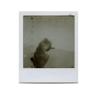 Michael Koch: new arrivals, 2014, Polaroid
