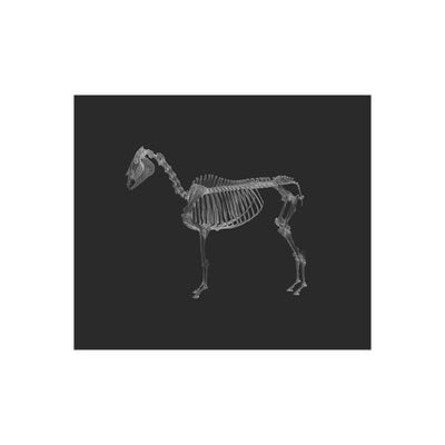 Michael Koch: a horse with no name, 2020, Inkjet-Print, Diasec, framed