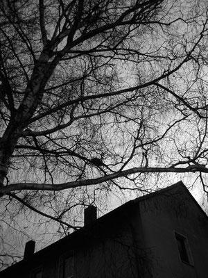 Michael Koch: Dorf (Nest) 2014, C-Print