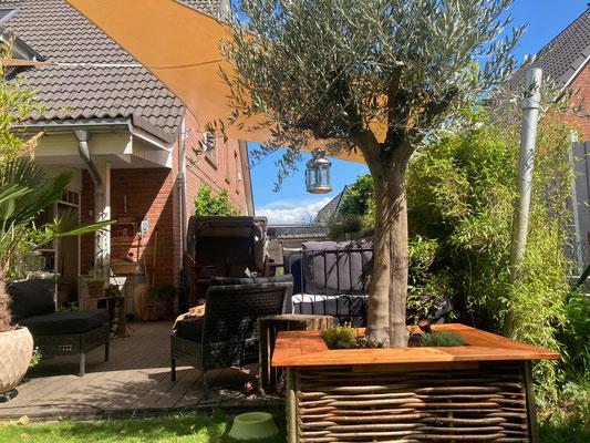 Olivenbaum in Weidenverkleidung mit Sitzbank www.hanse-palmen.de