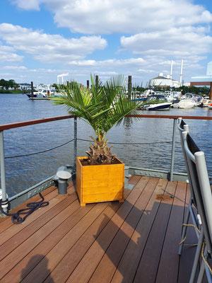 Chilenische Honigpalme im Holzgefäß auf einem Hausboot www.hanse-palmen.de