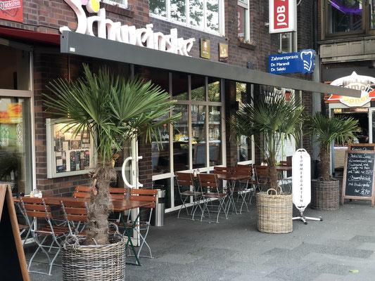 Drei Chinesische Hanfpalmen vor Schwinske in Hamburg www.hanse-palmen.de