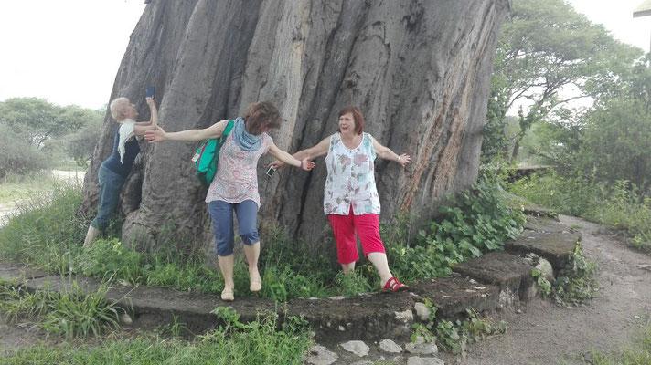 Der Baum ist ca. 1000 Jahre alt.