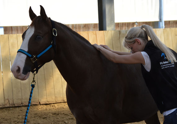 Dorntherpaie beim Pferd