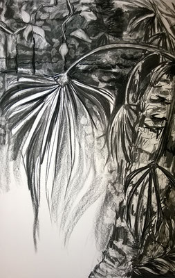 Houtskool tekening 2015