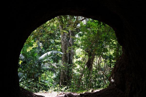 Martinique - Nature