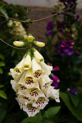 fleurs Joigny
