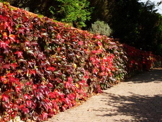 Gite du Vallon - Jardin