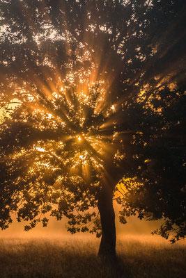 """Flammende Bäume"" im Frühnebel"