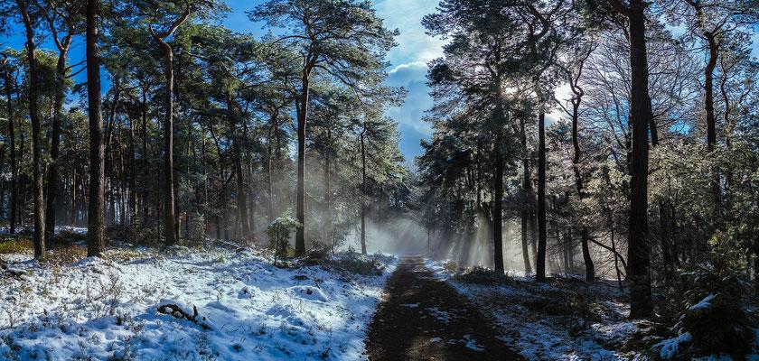 Winterwald am Weinbiet,  Panoramaaufnahme, 20 x 42 cm, Aluminiumrahmung, Kodak Pro Endura Fotopapier, 59 €