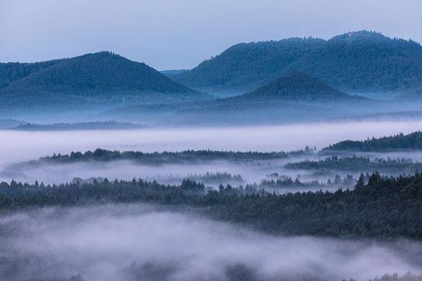 Nebelwald, im Hintergrund die Ruinen Wegelnburg und Hohenstein