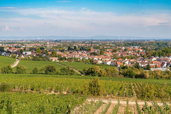 Blick auf Deidesheim
