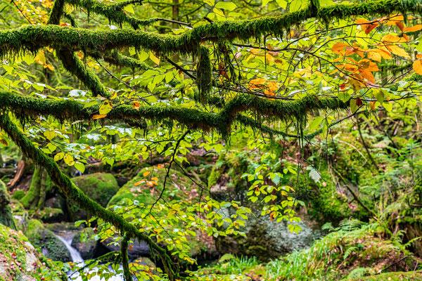 Herbst in der Gertelbachschlucht