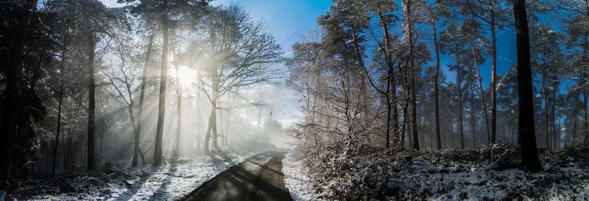 Nebelstimmungen im Wald