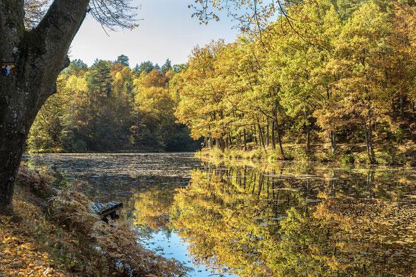 Spießweiher bei Eppenbrunn