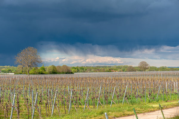 Wetterstimmung bei Duttweiler