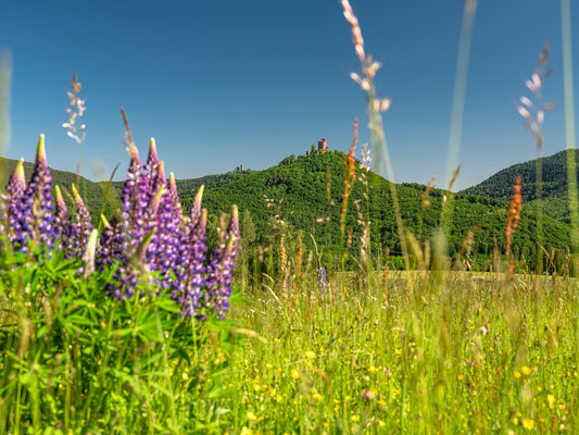 Sommerwiese bei Annweiler