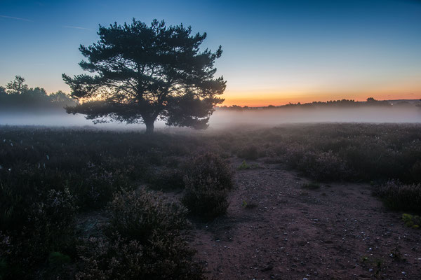 Nebel im ersten Tageslicht