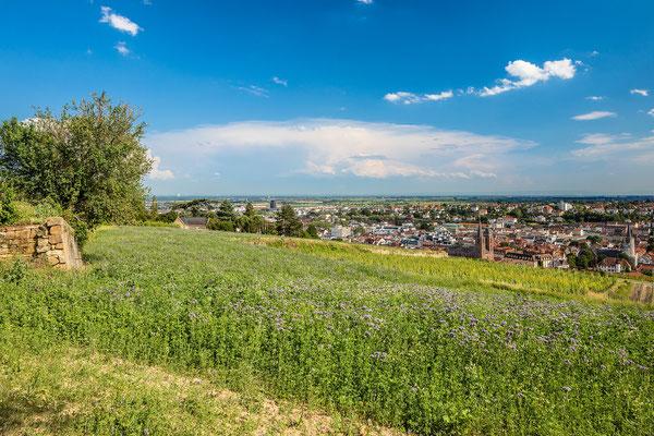 In den Weinbergen über Neustadt