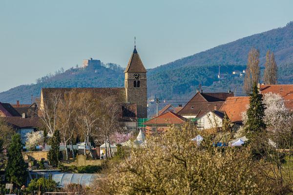 Mandelblüte in Gimmeldingen, Hambacher Schloss im Hintergrund