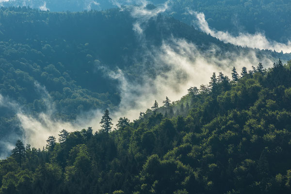 Nebelfetzen über dem Pfälzerwald