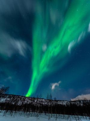 Polarlichter auf der Insel Senja