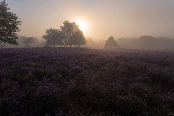 Sonnenaufgang im Frühnebel