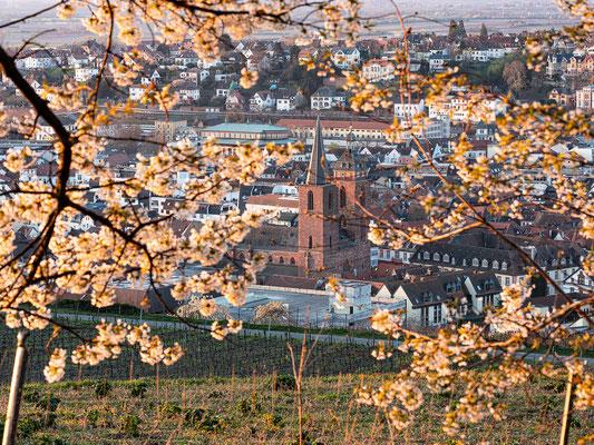 Morgenstimmung über Neustadts Weinbergen