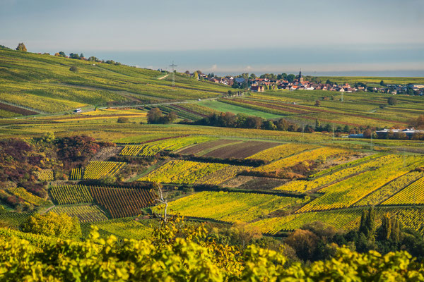 Blick über die Weinberge nach Frankweiler