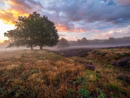 Nebliger Tagesanbruch in der Mehlinger Heide