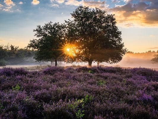 Bodennebel zum Sonnenaufgang in der Mehlinger Heide