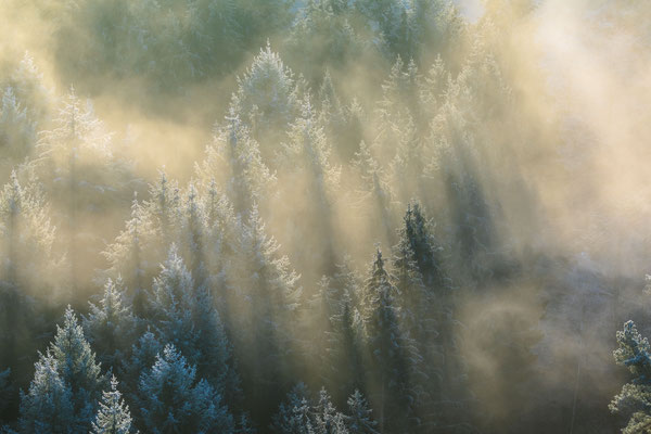Morgenlicht im Nebelmeer