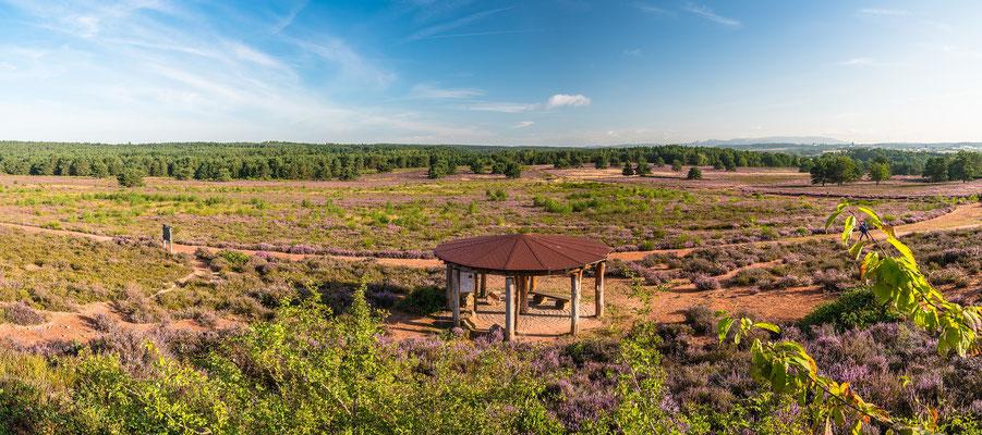 Überblick über die blühende Mehlinger Heide