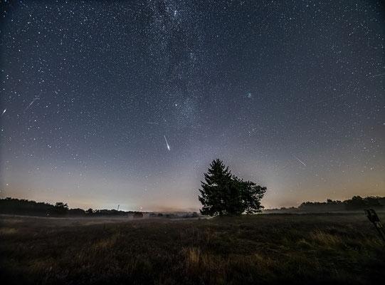 Sternschnuppennacht in der Mehlinger Heide