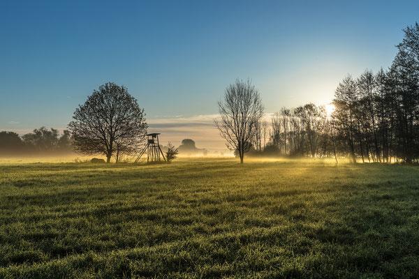 Morgennebel in der Queichtalniederung