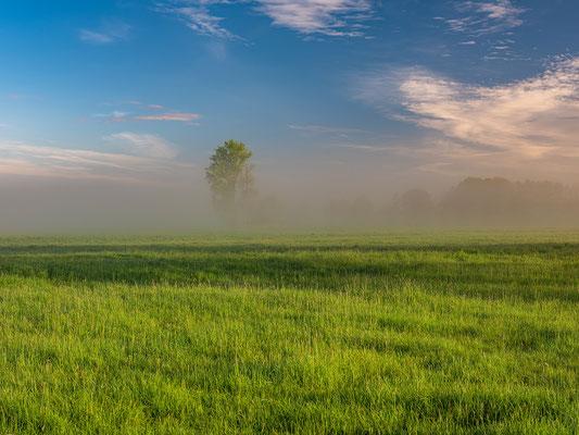 Morgennebel bei Geinsheim