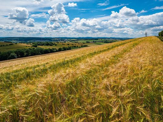 Sommerliche Landschaft bei Katzweiler