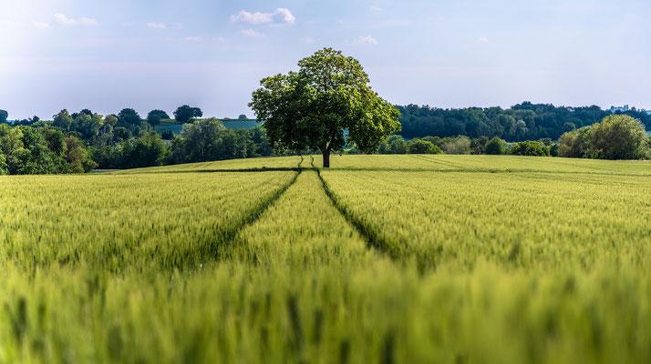 Landschaft in der Südpfalz