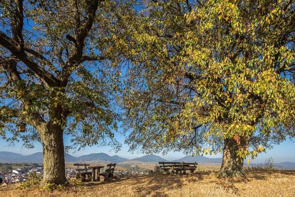 Kleine Kalmit im Herbstkleid
